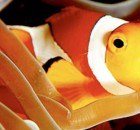 poisson-clown-thumbnail
