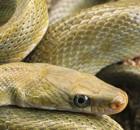 serpent-thumbnail