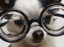 lunettes-sur-chien-thumbnail