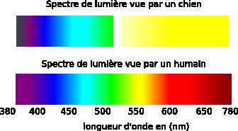 spectre_vision_chien