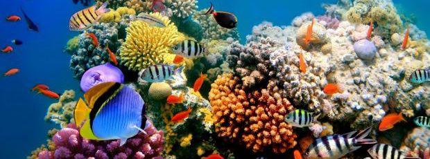 Images insolites : La vie sous marine