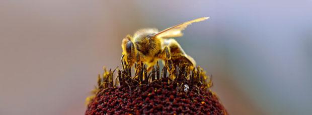 Le miel aurait la capacité de tout soigner ?