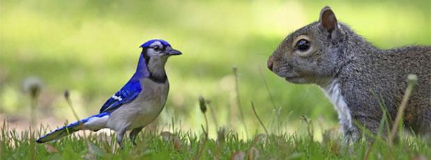 Images insolites : Câlins entre animaux