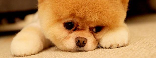 Il vaut mieux acheter un jouet bleu à son chien ?
