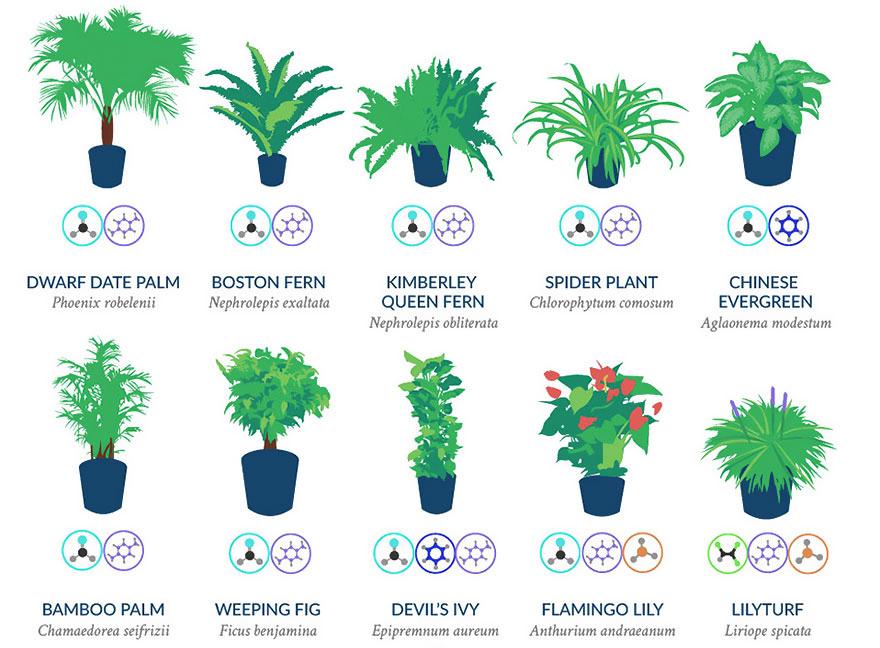 plante-regenerer-1