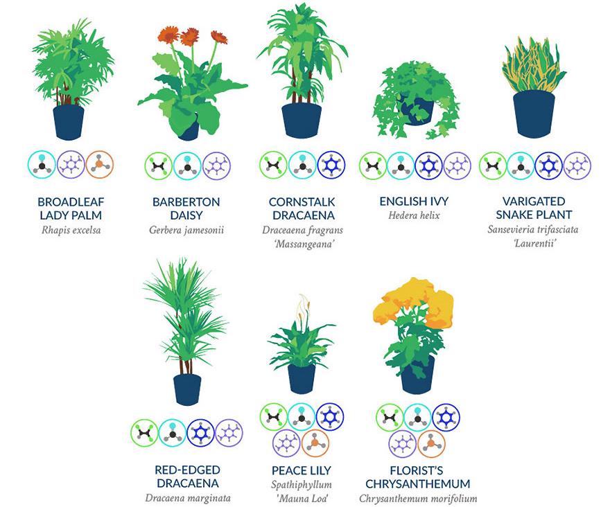 plante-regenerer-2